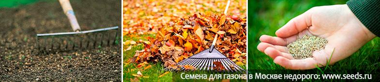 Посадка газонной травы своими руками осенью 84