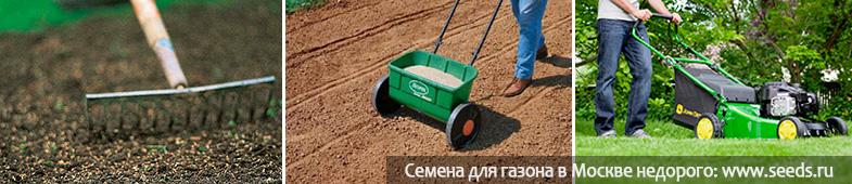 Газонная трава как сажать и ухаживать 55